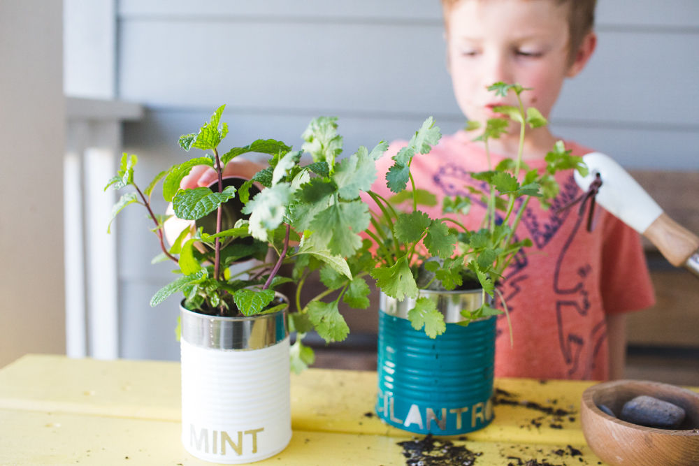 upcycled tin can herb garden-9976