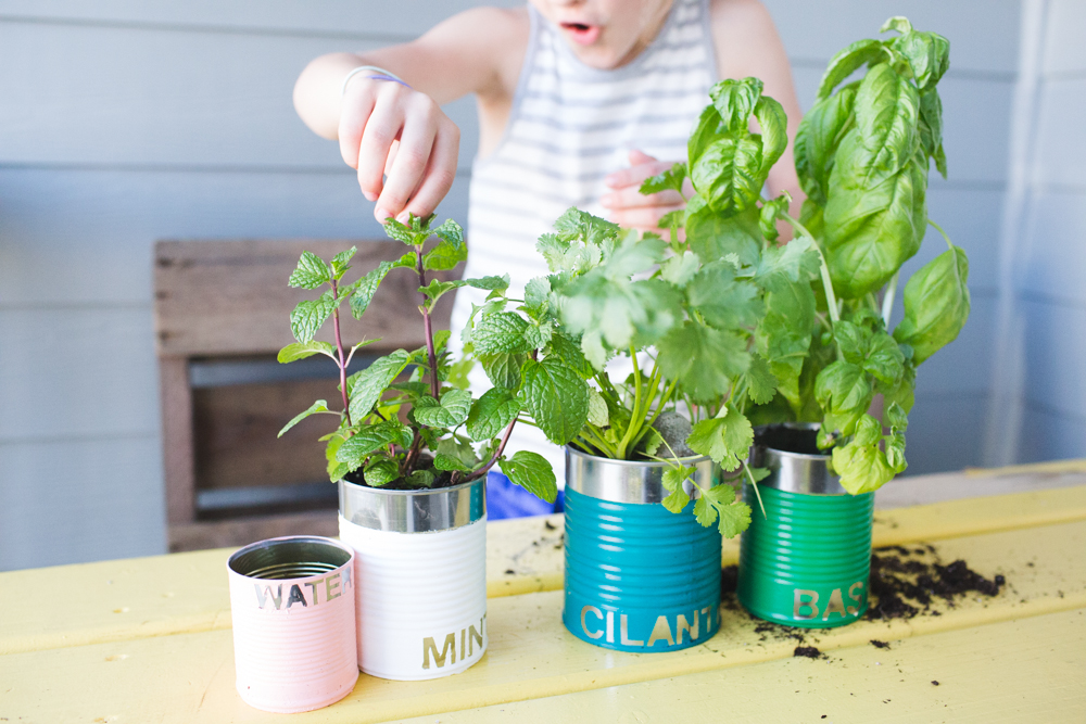 upcycled tin can herb garden-9998