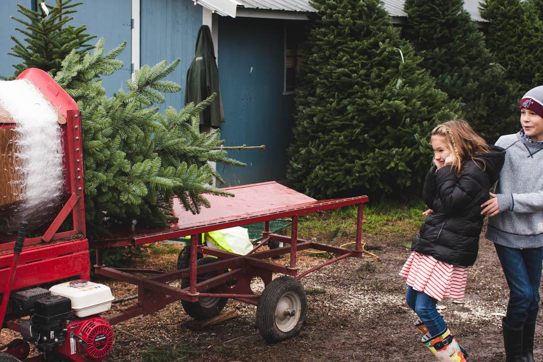 rae-ann-kelly-tree-farm-2016-3346-2